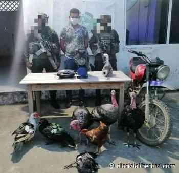 Lo capturaron en Majagual robando unos pavos y una moto vieja - Diario La Libertad