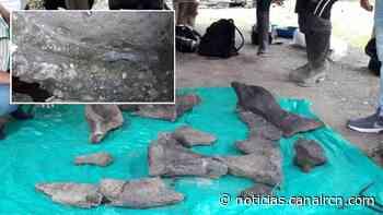 Hallan los restos de un mastodonte en Quinchía, Risaralda - Noticias RCN