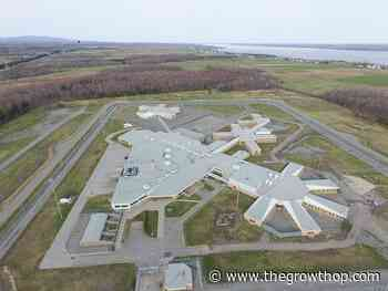 $211,100 in contraband, including weed, seized at Quebec's Donnacona Institution over three days - The GrowthOp