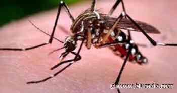Niño de 7 años murió por dengue en Chimá: secretario de Salud de Córdoba - Blu Radio