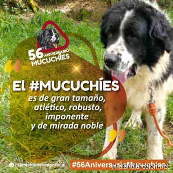 Perros Mucuchíes celebran 56 años como raza autóctona venezolana - Diario La Región