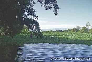 Manglares de la bahía de Parita, un tesoro para el ecosistema nacional - La Estrella de Panamá