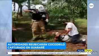 Noticias Capturan un enorme lagarto en Guararé provincia de Los Santos - TVN Panamá