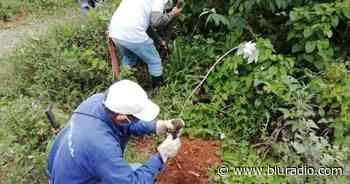 Campesinos se unieron para sembrar 450 árboles en zona rural de Vijes, Valle - Blu Radio