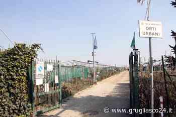 Grugliasco, nuova associazione per gli orti urbani: c'è tempo fino al 15 ottobre - Grugliasco24.it