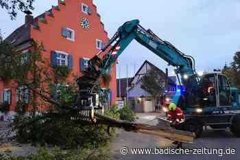 Umgestürzter Baum in Gottenheim gefährdet Verkehr auf der Hauptstraße - Gottenheim - Badische Zeitung