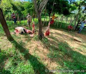 Los ganaderos de Mahates piden apoyo contra abigeos - El Universal - Colombia