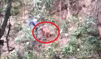 Valeroso rescate de mascota que cayó por precipicio en Silvania, Cundinamarca - Noticias Día a Día