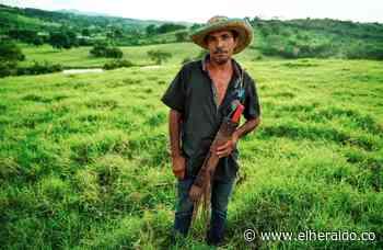En video | Por Santa Rosa del Sur comienzan mercados campesinos en Bolívar - EL HERALDO