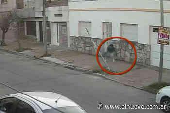 Robada y apuñalada por un vecino en Lomas del Mirador - Noticias, TL9 Noticias (Clips) - telenueve