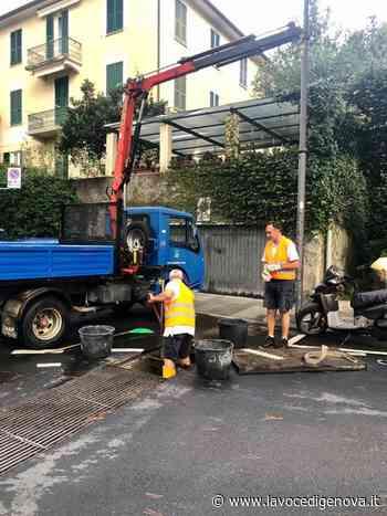 Santa Margherita Ligure: proseguono gli interventi di pulizia reti bianche - LaVoceDiGenova.it