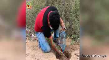 Lambayeque: sembrarán más de 200 árboles de algarrobo en Ciudad Eten - LaRepública.pe