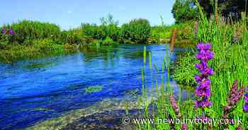 Environment: Chalk streams like the River Kennet are an important natural resource - Newbury Weekly News Group