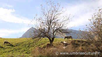 Altrocioccolato: a San Giustino la proiezione del film Le Terre di tutti - Umbria e Cultura