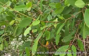 Descubren cadáver en una laguna de Huimanguillo - El Heraldo de Tabasco