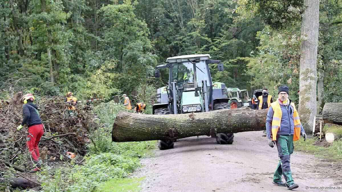Dreieich: 150 Helfer bereiten Waldstück für Aufforstung vor - op-online.de