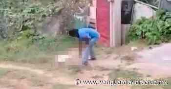 (Video) Mata a una perrita a punta de machetazos - Vanguardia de Veracruz