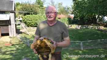 Heidecks früherer Bürgermeister: Der mit den Schildkröten spricht - Nordbayern.de