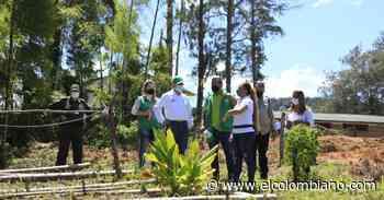 """Granja """"siembra"""" en zona rural de Amalfi: ejemplo de trabajo y empoderamiento de las mujeres - El Colombiano"""
