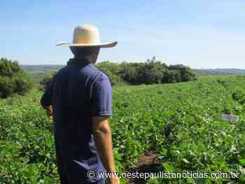 Vargem Grande Paulista um celeiro agrícola que pede socorro! - oestepaulistanoticias.com.br