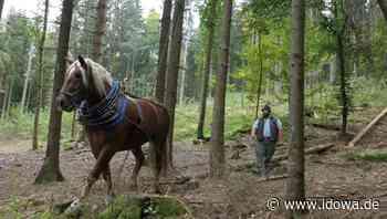 Kollnburg: Michael Fuchs reißt mit Pferden Holz - idowa