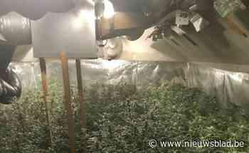 """Servisch koppel ziet 129.000 euro verbeurd na bouwen van cannabisplantage: """"Nochtans hebben ze geen winst gemaakt"""""""