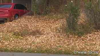 Reconsider the rake: Nature Conservancy asks Canadians to keep leaves on their lawn