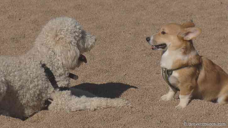 Study: Denver Dog Owners Ranked Most Active