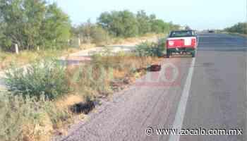 Atropellan y matan a dos osos en carretera Zaragoza-Acuña - Periódico Zócalo
