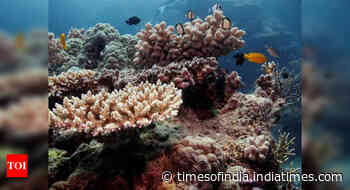 Great Barrier Reef has lost half of its corals over past 25 years: Study
