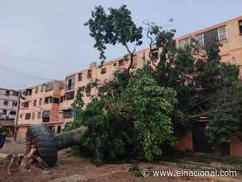 Vientos huracanados en La Guaira y Catia La Mar, techos y árboles caídos - El Nacional