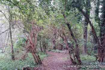 Historische wandelweg tussen watermolens opnieuw toegankelijk