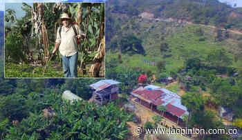 Cafetero de Bucarasica recibe premio por la calidad del grano - La Opinión Cúcuta