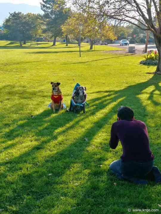 Pup-arazii: Photoshoot raises funds for Albuquerque animal shelters