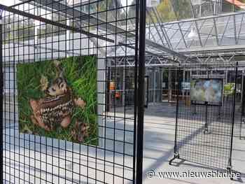 Fototentoonstelling 'Bos in beeld' in Het Leen