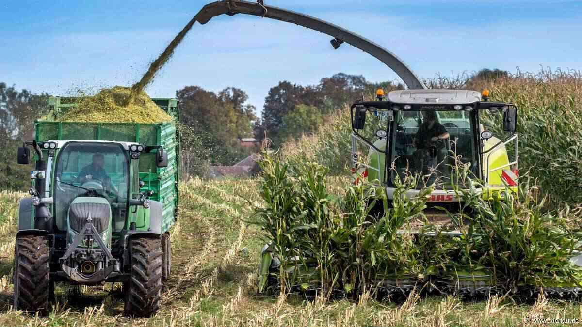 Maisernte bei Holzkirchen: 812 Hektar sind reif für den Häcksler - Merkur.de