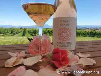 Nella guida Slow Wine 2021 anche il Bardolino Chiaretto della cantina Poggio delle Grazie dei fratelli Brutti di Lugagnano - Il Baco da Seta