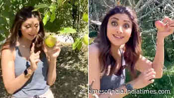 Hungama 2: Shilpa Shetty goes apple picking in Manali