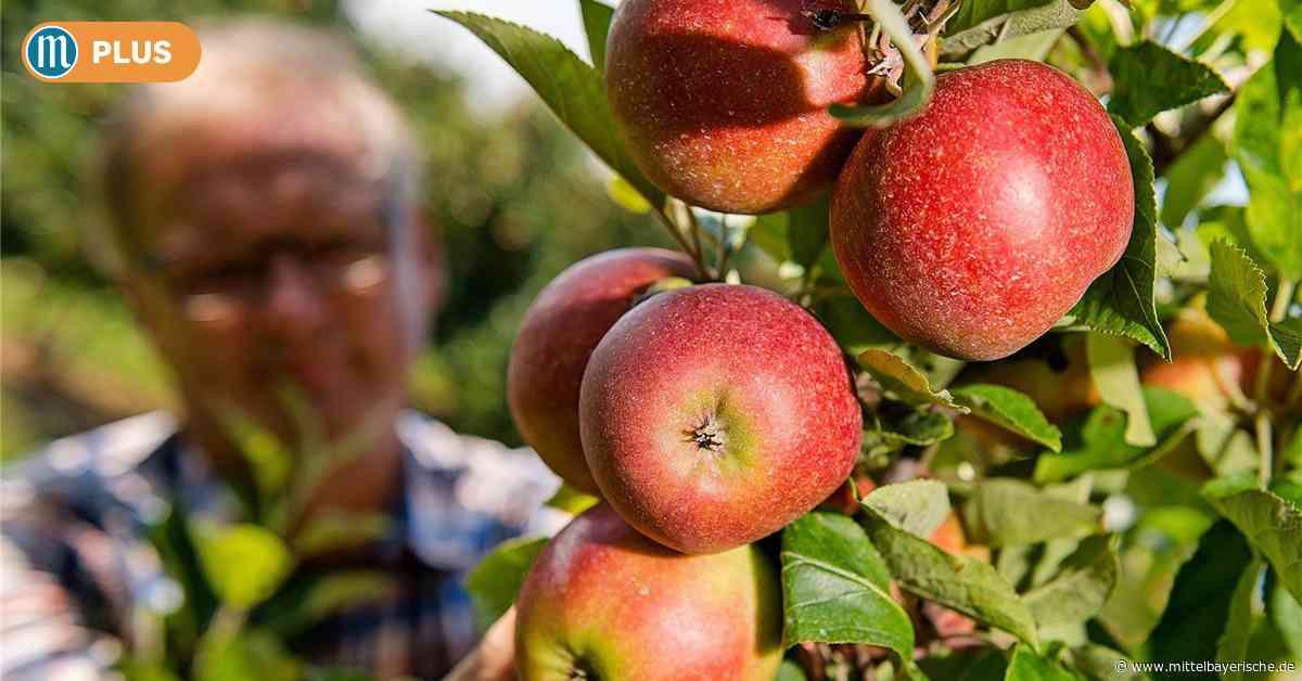 Diebe stehlen Kindern in Dietfurt Äpfel - Mittelbayerische