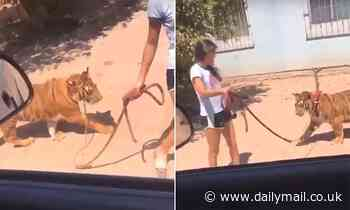 Girl shows off her pet tiger while taking it out for a stroll in western Mexico
