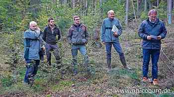 Maroldsweisach: Der Wald kämpft um sein Überleben - Neue Presse Coburg