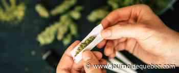 Augmenter les points d'accès au cannabis médical