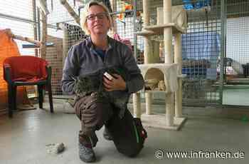 Quarantänestation für Katzen im Lichtenfelser Tierheim Überfüllt