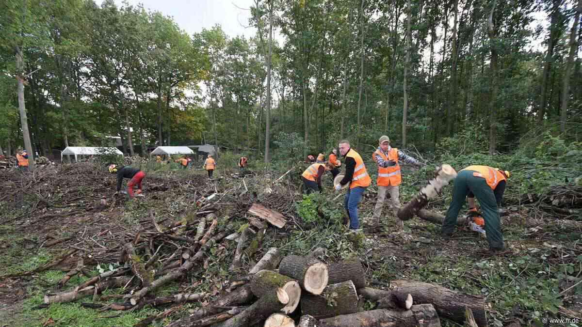 150 Bürger wollen den Wald in Dreieich aufforsten - Frankfurter Rundschau