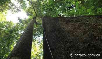 Guácharos - Puracé en el mercado de carbono - Caracol Radio