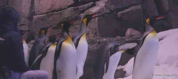 BioPark offers personalized video messages from animals