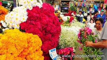 Floristas locales serán prioridad para reactivar economía en Matehuala - Código San Luis