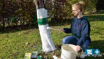 Netphen: 10 Tipps für den Garten im Herbst - WP News