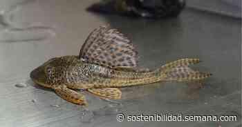 peces de la reserva natural de yotoco en riesgo de extincion - semana.com