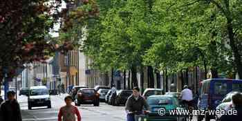 Bis zum Jahr 2023: Bitterfeld-Wolfen legt Verzeichnis aller Bäume an - Mitteldeutsche Zeitung